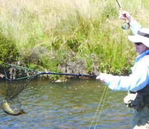 Keiran McCann landing a lovely brown on a fly in the Eucumbene River, he catches and releases.